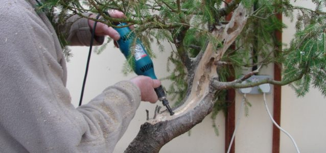 Making sawdust …. making bonsai