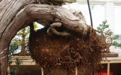 Understand your bonsai soil.