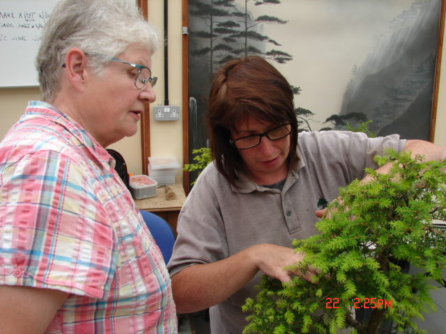 New for Willowbog, a Caz Bonsai Workshop